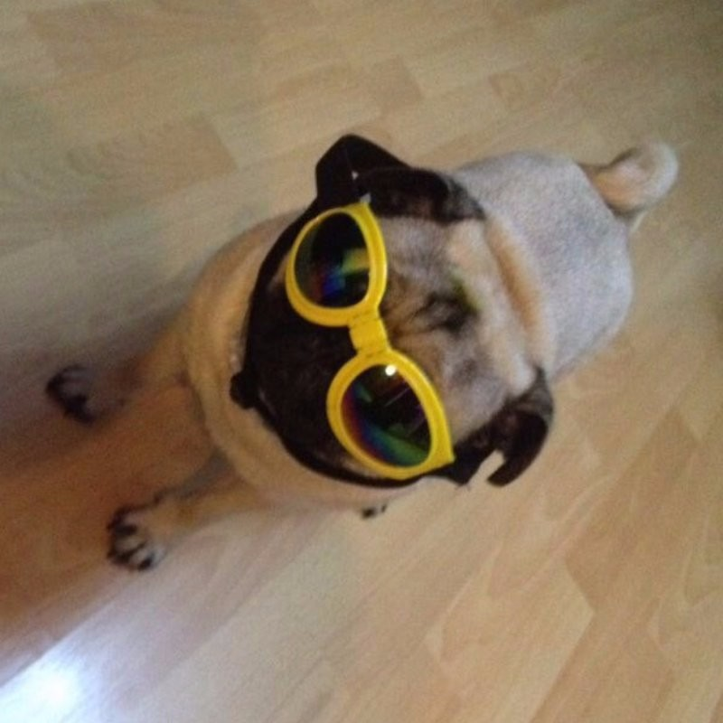 sealen cool stylish and funny cute pet sunglasses halloween costume small dog sunglasses for uv protection
