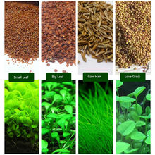 6 Pack Aquarium Plants Aquatic Water Grass Seeds Cow-hair LOVE Lucky Seeds Fish Tank Decoration Landscape Ornament(China)