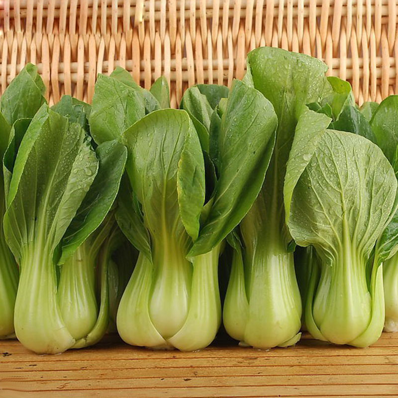 pak choi bok choy chinese cabbage cabbage seeds. Black Bedroom Furniture Sets. Home Design Ideas