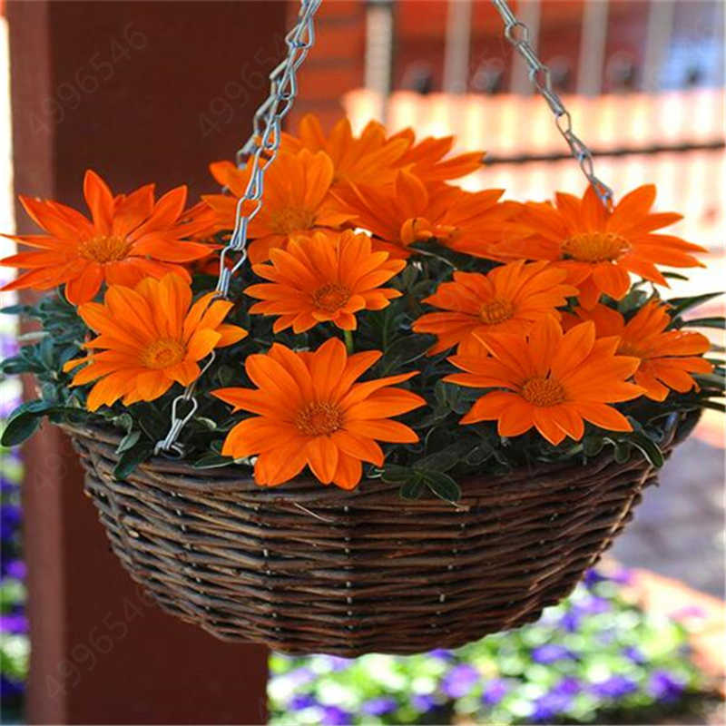 100 pz/borsa Colore Misto Gazania Rigens Flores Bonsai, Indoor Fiore Pianta Per La Casa e Giardino, impianto Per Indoor Outdoor Pianta