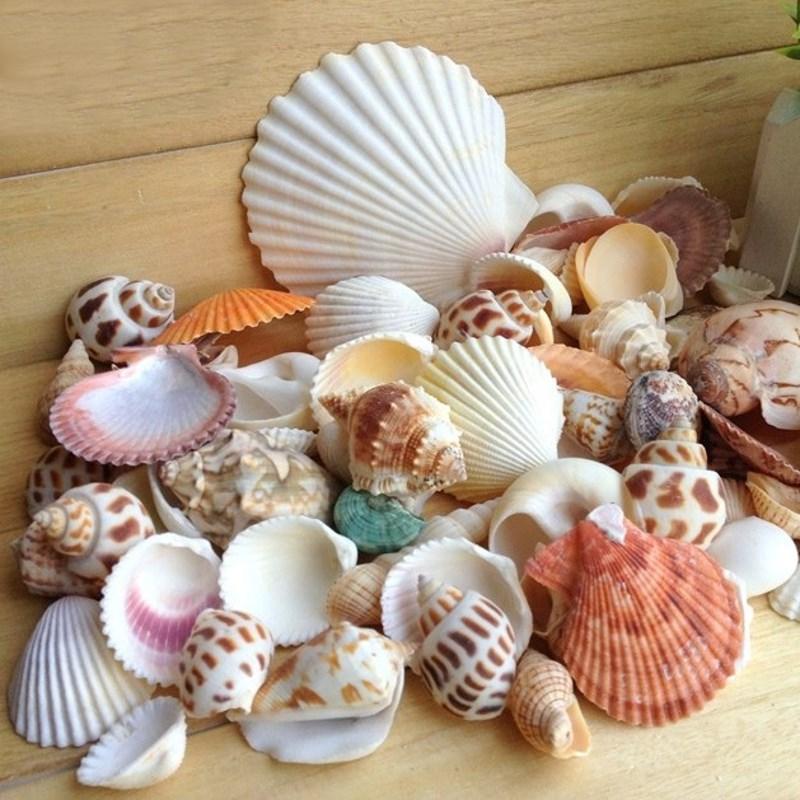 Popular seashell craft supplies buy cheap seashell craft for Bag of seashells for crafts
