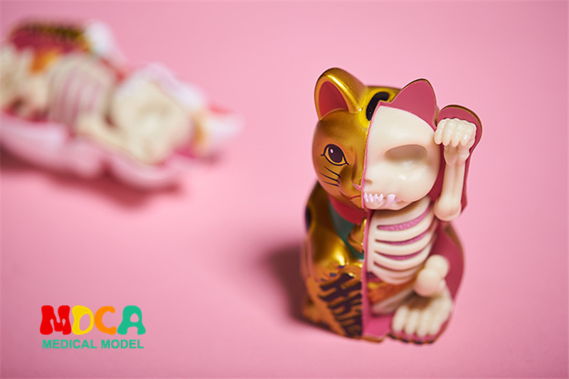 Golden money cat 4d master puzzle Assembling toy Perspective bone anatomy model robin hood 4d xxray master mighty jaxx jason freeny anatomy cartoon ornament