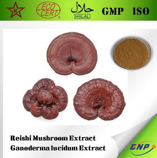 500gram Highest Pure Ganoderma lucidum Extract 30% Polysaccharide improves resistance against diseases free shipping organic ganoderma lucidum extract powder