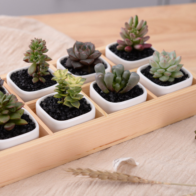 Set of Modern Geometrical White Square Ceramic Succulent Planters Desktop Flower Pots with Tray Home Decoration(10 pots+1 tray )