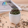 3 pcs Teeth Type  vanilla potted plants pot Dental toy office desktop furnishing articles presents fabulous teeth Herb plants