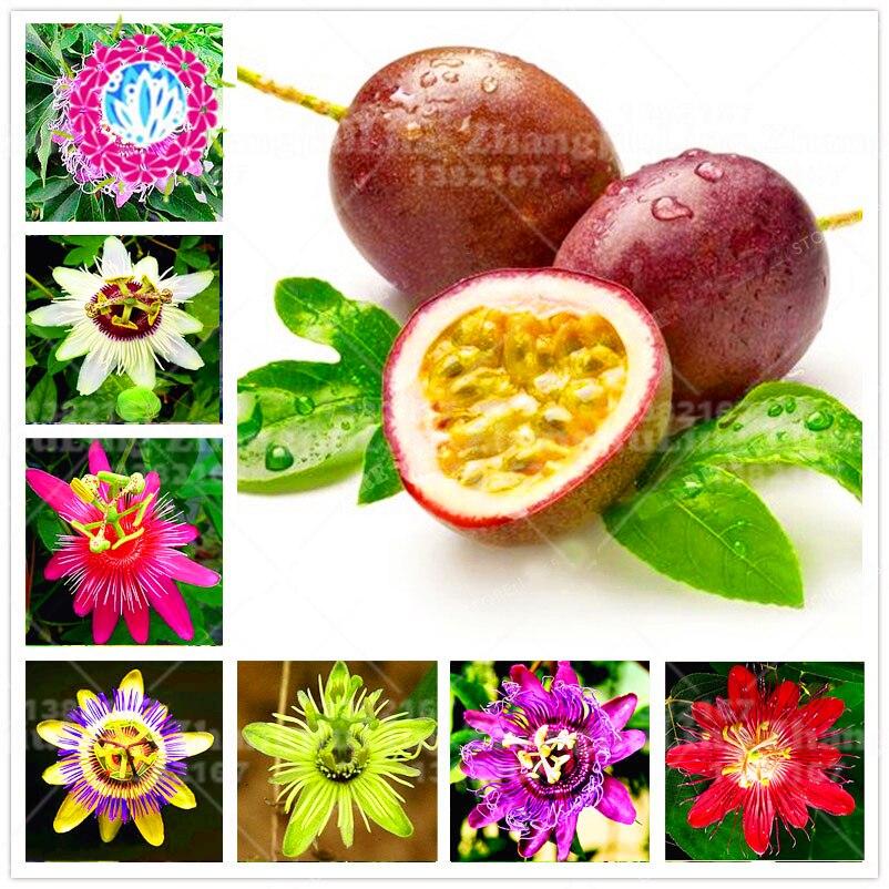 100pcs super rare Passionflower seeds Potted bonsai Rare flower plant Passiflora Ornamental Plant for home garden