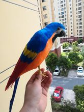 new real life blue&orange parrot model foam&feather simulation bird gift about 42cm xf0199