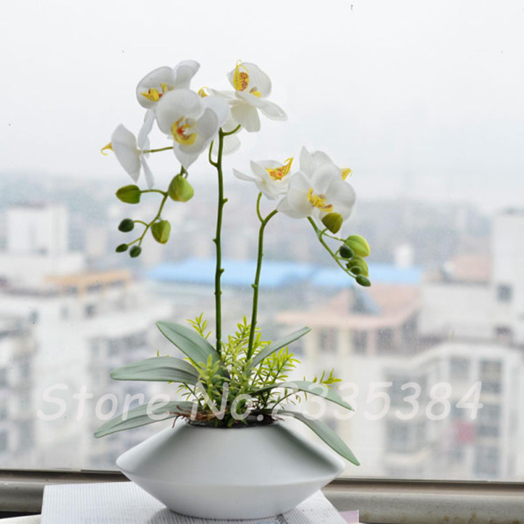 200 PCS Potted Plants Phalaenopsis Orchid Flower Seeds