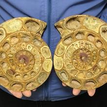 1350 г AA++ Мадагаскар Редкие раскол ископаемые образцы раковины из аммонита Исцеление Свадебные сувениры