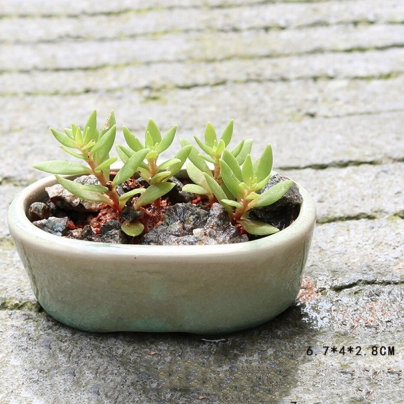 8Pcs Ceramic Micro Garden Home Desk Mini Flowerpots Juicy Plants Vase Flower Pots Container Small Bonsai Pot