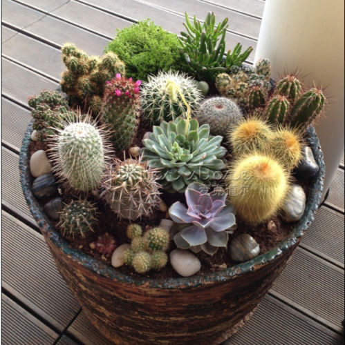 Marseed 20pcs mix multi style cactus seeds rare plants for Decoration jardin cactus