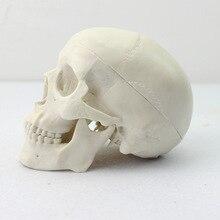 Лучшие Enovo миниатюрный Череп Скелет модель медицинского искусства использует кости черепа модель кости черепа
