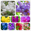 New Arrival! 100 Pcs/Pack Japanese bonsai potted lilac flower Plants DIY home garden