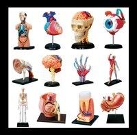 4D MASTE ludzkiego oka, ucha, kości, ręcznie, mięśni, czaszka, serce, żołądka, ząb montowane puzzle zabawki edukacyjne cutawaymodel medyczne