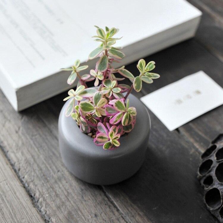 Garden Supplies Mini Garden Flowers Pots Planters Colors Ceramic