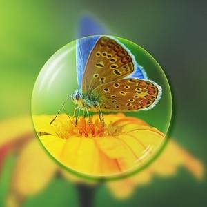 Image 2 - Lentilles de verres asphériques Index 1.56