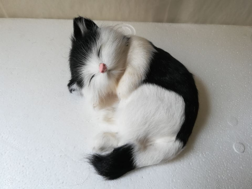 Unduh 96+  Gambar Kucing Hitam Putih Imut Gratis