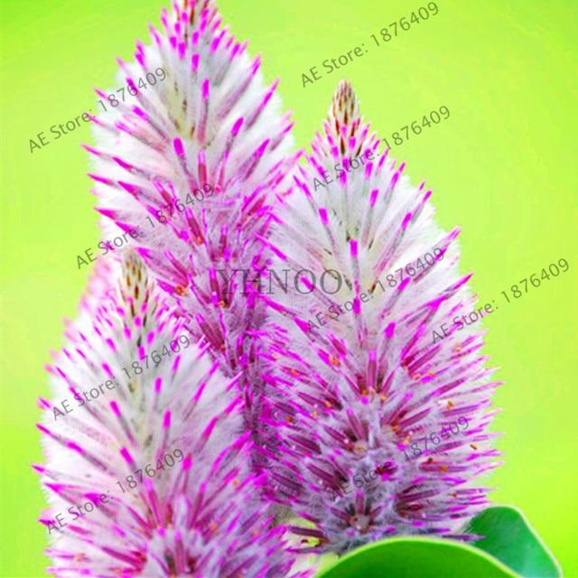 Plantas de exterior con flor resistentes gallery of - Planta de exterior resistente ...