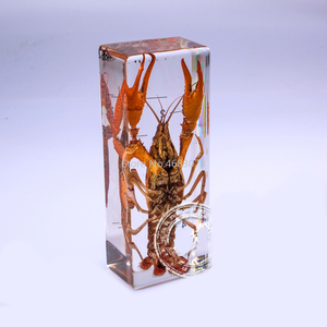 Image 3 - Brand New lobster specimen In clear Lucite Educational Explore Instrument 11x4.5x2.8cm