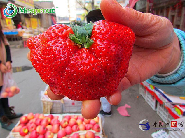 Top Sale ! Very Easy New Bonsai 50pcs Super Big Strawberry Bonsai,garden Supply, Perfume Bonsai,ghd,home & Garden,home Decor