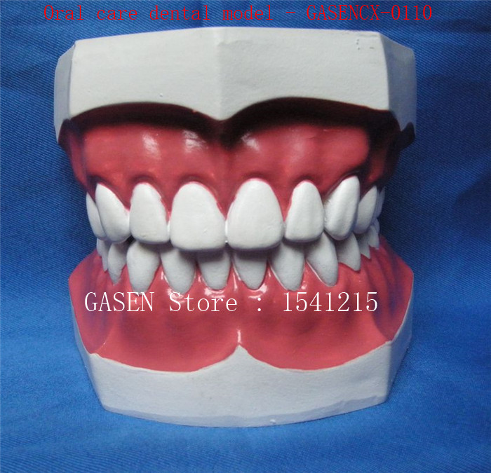 Oral model Nursing tooth model Medical teaching model Oral care dental model - GASENCX-0110 enovo medical qualification examination tooth extraction model oral cavity dental model oral cavity division tooth extraction