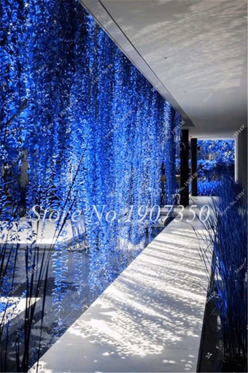 200 Pcs Rare Blue Pearl Chlorophytum Bonsai Desktop