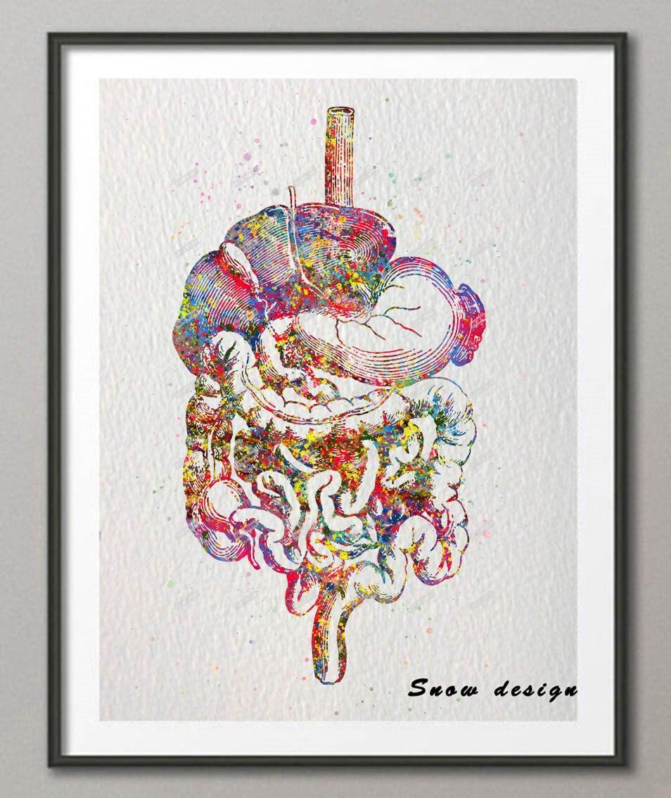 Acuarela original tracto digestivo impresión de cartel Picture ...