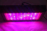 Wholesale led grow light 300w For Medical Plant Grow Greenhouse Plant Light 5PC/Carton