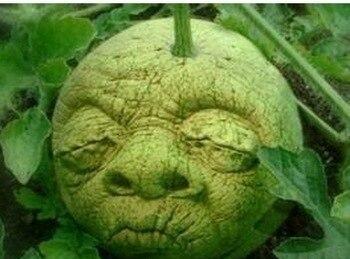 20 pcs Mini melancia Semente como um homem raro, germinar 95%, sementes de frutas bonsai semente de flor, casa transporte gardenfree