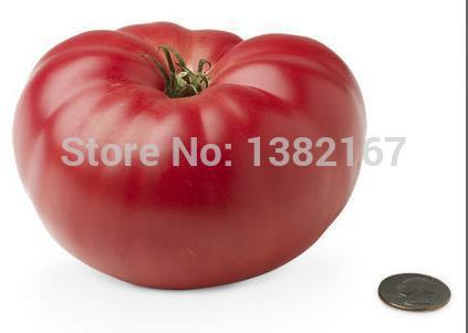 200 SEEDS - GIANT MONSTER TOMATO Seeds Easy Planting Q