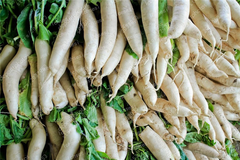 Image 3 - 100 Pcs Rare White Radish Bonsai Juicy And Nutritious Early Spring Radish Very Delicious Vegetable Garden Food Easy To Grow