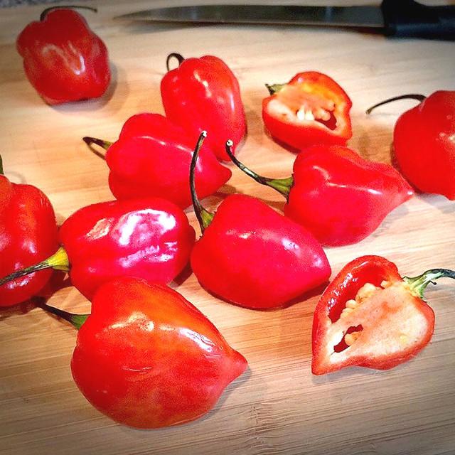 100 bonsai Garden Plants Pepper bonsai Sementes Home Bonsai Giant Chili Vegetables Happy Farm New Spices Spicy Free Shipping