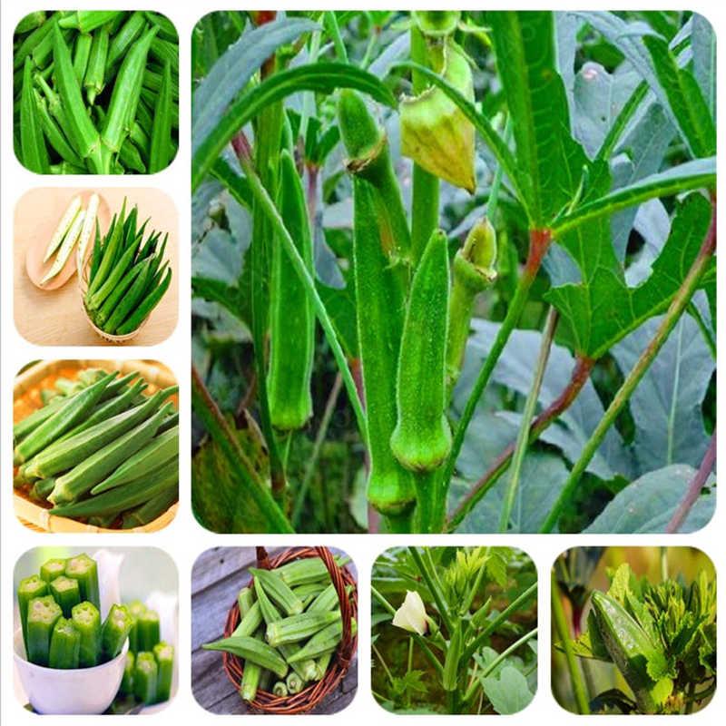 حار بيع! 50 قطعة البامية بونساي ، البامية زراعة ، العضوية الإرث الخضار الفاكهة ، بونساي نبات زهرة للمنزل حديقة سهلة تنمو