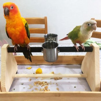 Parrot Play Wood Stand Bird Grinding Perch Table Platform Birdcage Stands Feeder Dish Cup Portable Playstand Small Cockatiels 1