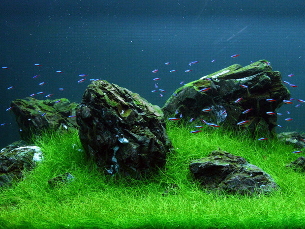Online Buy Wholesale Aquarium Plants Soil From China