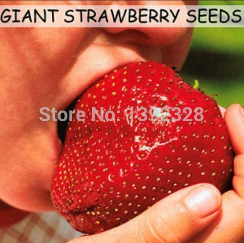 500pcs Super Giant Red Strawberry Fruit Seeds Z