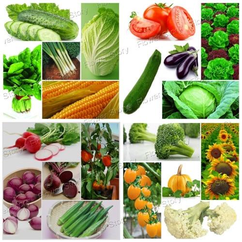 4500 Pcs Vegetable Fruit Survival Heirloom Fresh Seeds 20 Varieties Pack Easy to Grow-in Bonsai ...