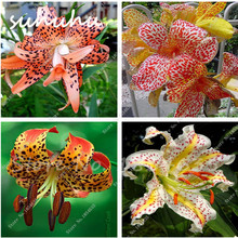 Hot Sale 100 Pcs Rare Colors Lily Seeds, Cheap Perfume Lilies Seeds, Rare Color Flower Garden Plant - Mixing Different Varieties