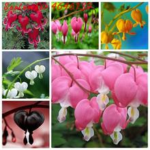 100 pcs Dicentra Spectabilis Bleeding Heart classic cottage garden plant, heart-shaped flowers,rare orchid heart flower bonsai