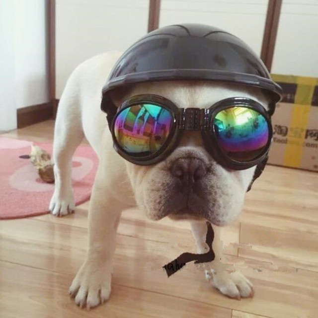 Capacete Da Motocicleta Cap Chapéu Traje Do Gato Do Cão do animal de  estimação Acessório Fontes 5435353e17