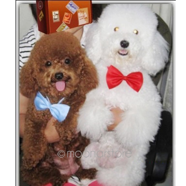 Most Inspiring Necktie Bow Adorable Dog - Fashion-Pet-Decoration-Bowknot-Cute-Dog-Tie-Bow-Dogs-Necktie-Pets-Collar-Clothing-Cat-Puppy-Decor  HD_474772  .jpg