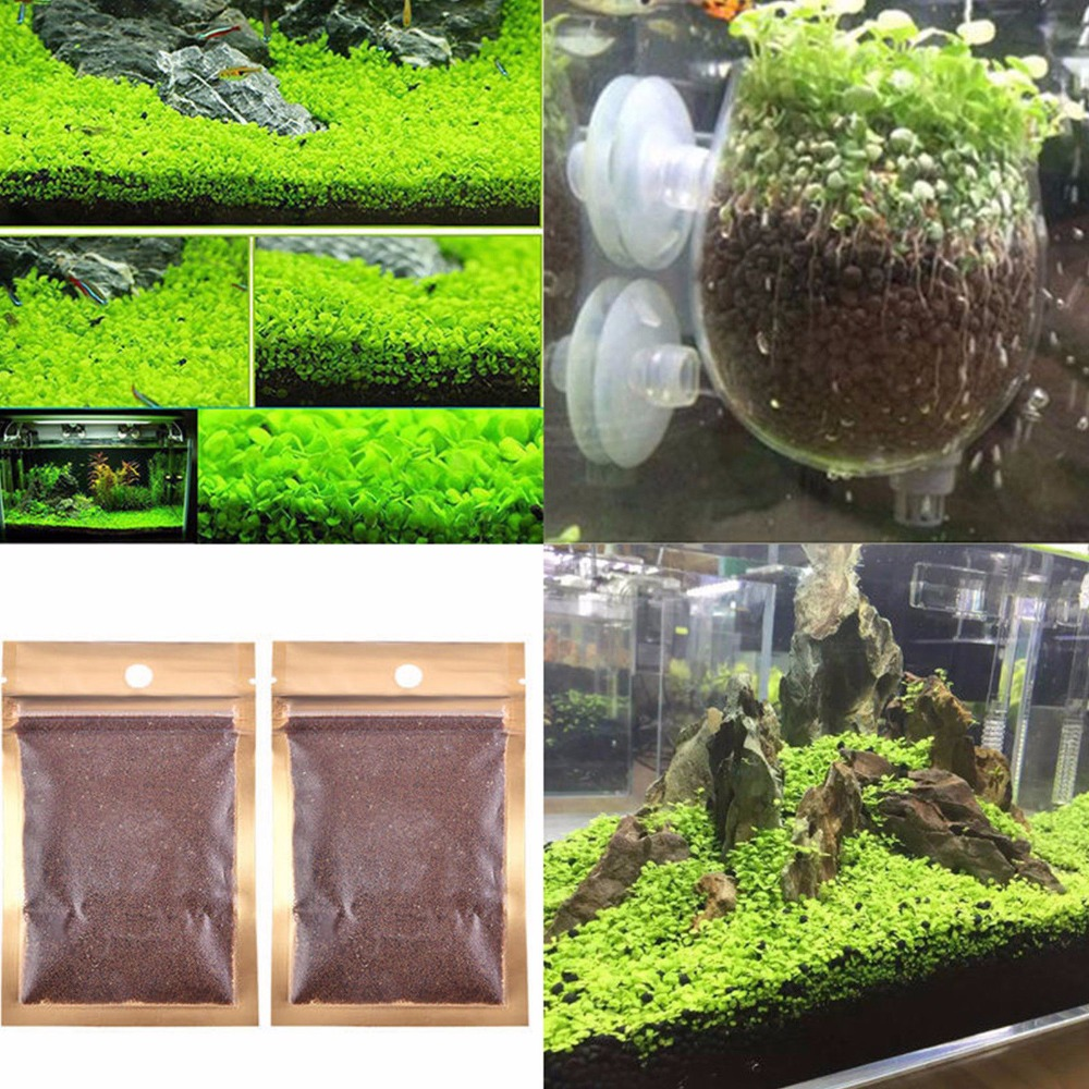 US $1 13 8% OFF Lots Aquarium Plant Seeds Aquatic Double Leaf Carpet Water  Grass Fish Tank Decor-in Decorations from Home & Garden on Aliexpress com  