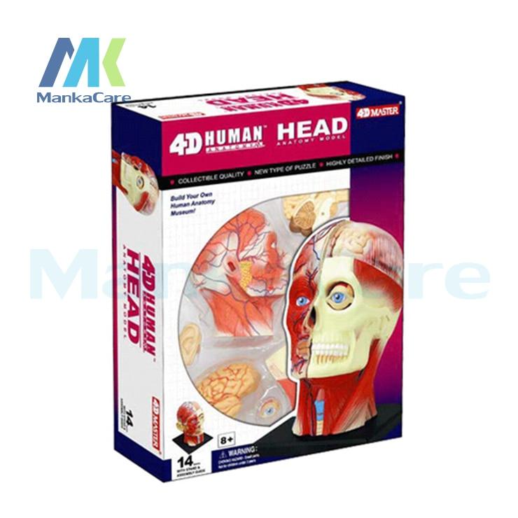 4D Master medical human body skeleton anatomical model HEAD ANATOMY Brain