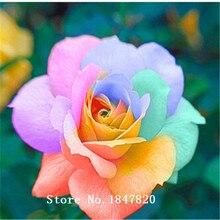 100Pcs seeds Rare Rainbow Rose Seed, Lover Colorful Home Garden Plants Rare Rainbow Rose Flower Seeds