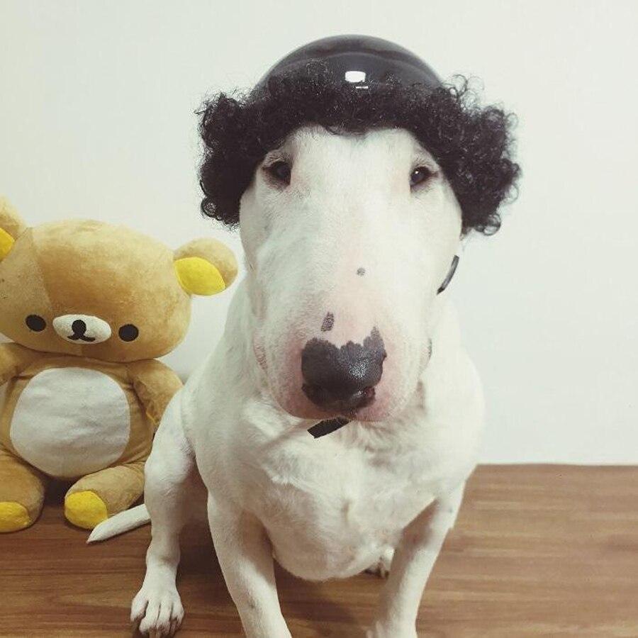 Nemokamas pristatymas sprogimo naminių gyvūnų perukas šunys - Naminių gyvūnėlių produktai - Nuotrauka 4
