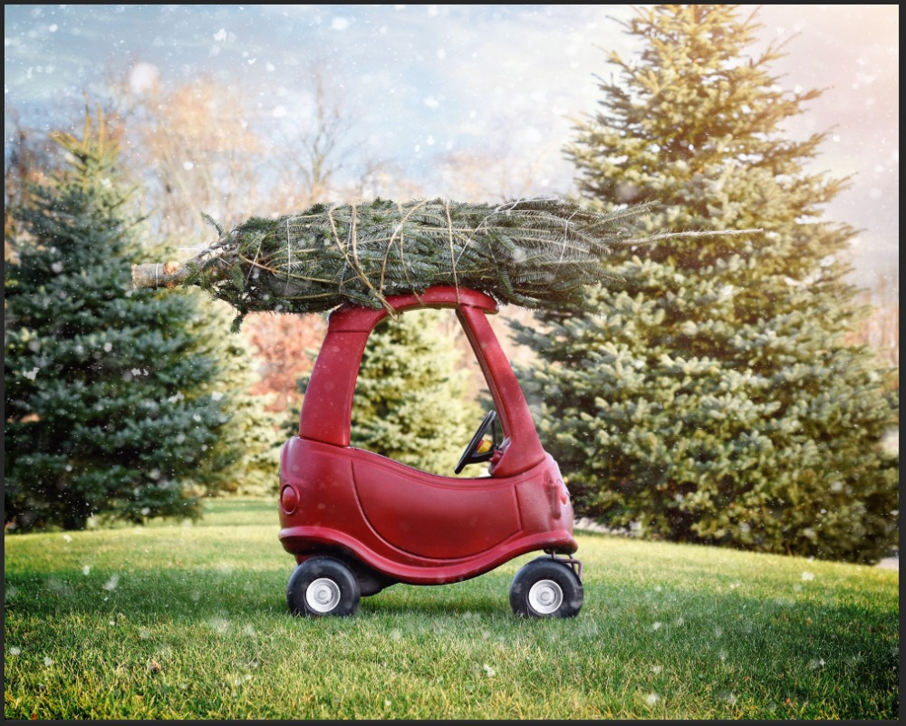7x5FT Green Pine Branch Red Scooter Carriage Park Garden Grass Custom Photo  Studio Backdrop Background Vinyl
