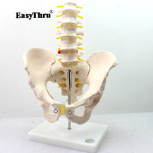 лучшая цена Human Model with Five-section Lumbar Vertebrae Model Lumbar Spin Lumbar Spine Intervertebral Disc Pelvis Skeleton Model
