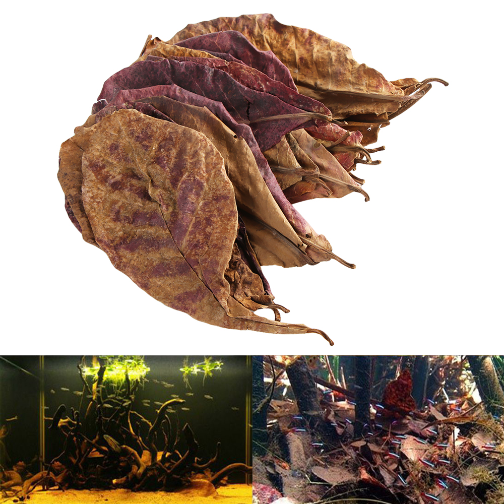 50g/Pack New Effective Natural Terminalia Catappa Foetida Leaves Island Almond Leaf For Fish Cleaning/Treatment Aquarium Tank