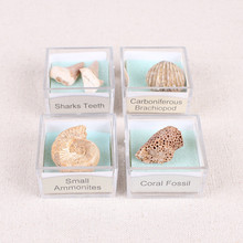 1PC Fossil Paleontology Marine Magnifying Glass Mineral Specimen Box Sha Fish Snail Animal And Plant