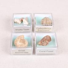 1PC Fossil Paleontology Marine Magnifying Glass Mineral Specimen Box Sha Fish Snail Animal And Plant